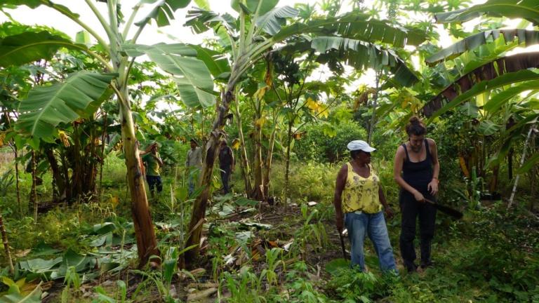 projet pepital agroforesterie