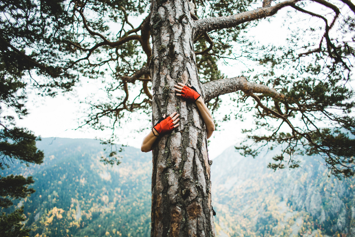 communaute arbre