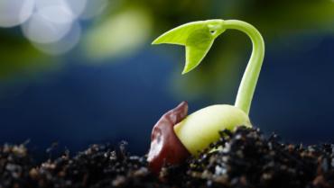 Qui sème une graine, plante un arbre !