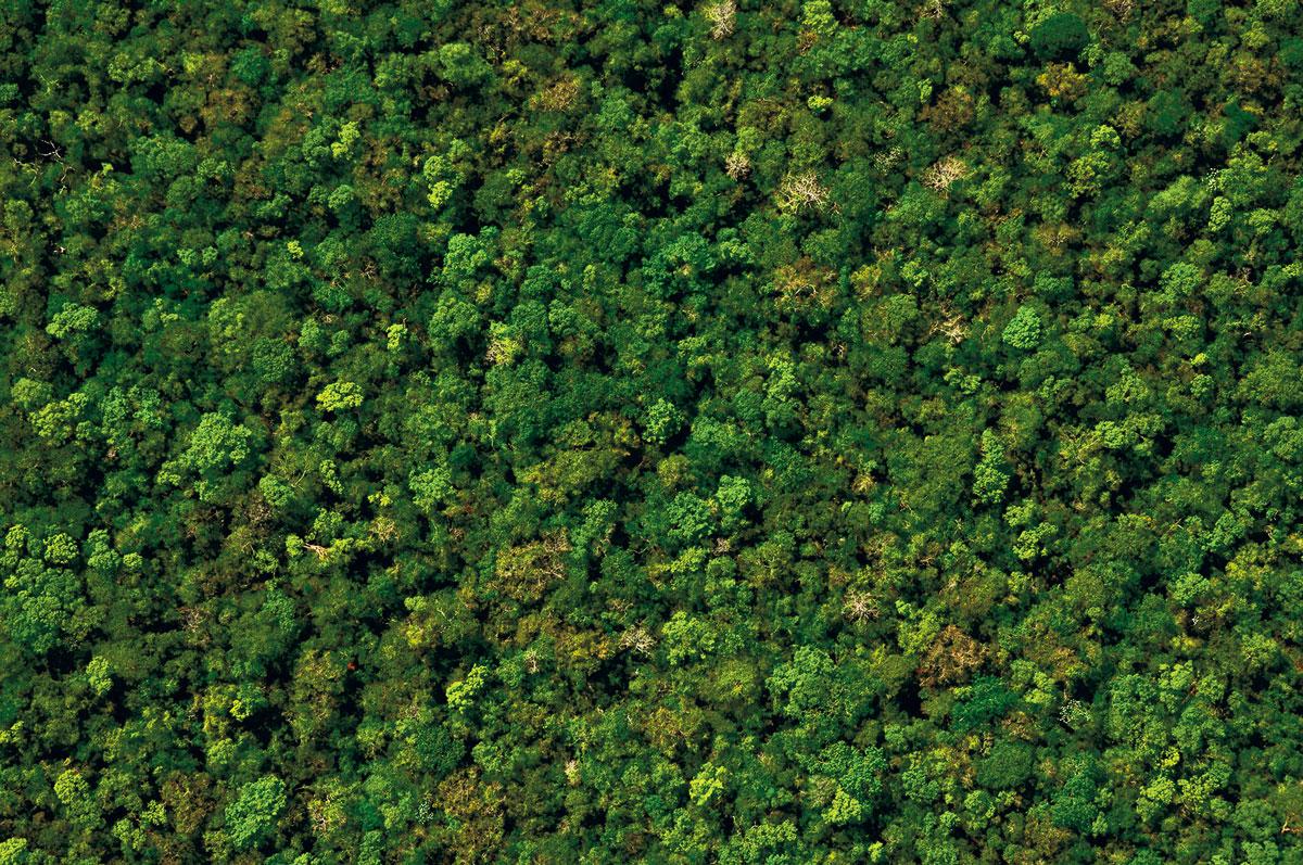 foret subtropicale