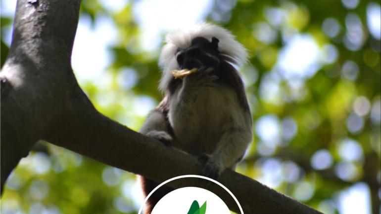 🇨🇴 Colombie – Projet de préservation des forêts sèches, habitat naturel du singe titi