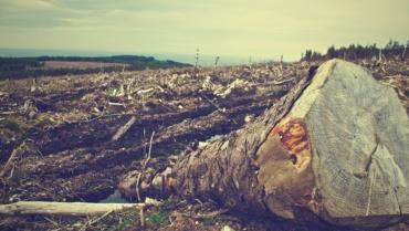 Comprendre la déforestation (en 4 minutes)