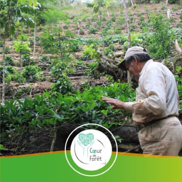 🇧🇴 Bolivie – Projet d'agroforesterie pour préserver la forêt tropicale humide des Yungas