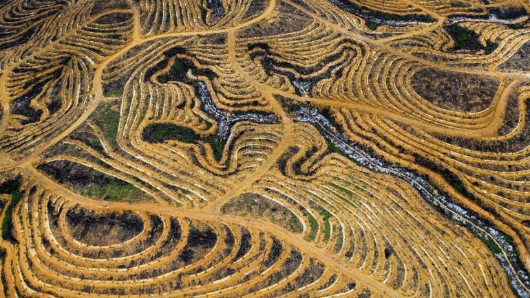 Comprendre l'huile de palme et la déforestation (en 4 minutes)