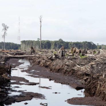 Total : Non à l'huile de palme dans le biocarburant