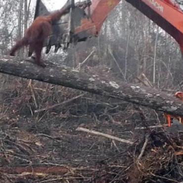 FERRERO : Stop à l'huile de palme