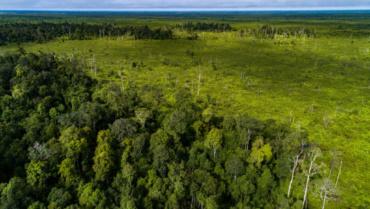 Indonésie : la déforestation financée par les banques