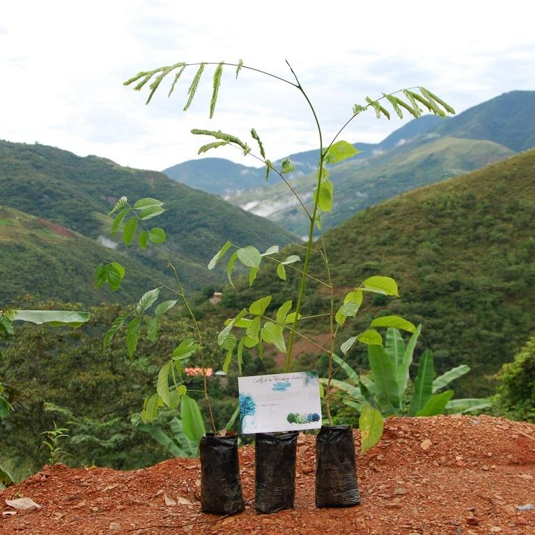 Préservation des forêts à Coroico en Bolivie