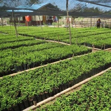 🇮🇩 Indonésie – Projet de préservation et restauration de la biodiversité de l'île de Flores