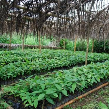 Reforestation des abords du Parc de Masoala