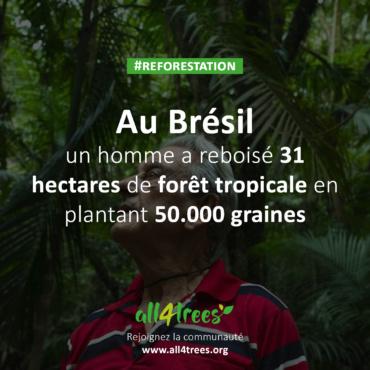 En 40 ans, ce Brésilien a reboisé 31 hectares de la forêt tropicale en replantant 50 000 graines