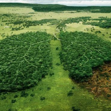Oreo : un mauvais goût de déforestation