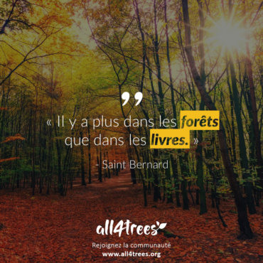 Citation #1 – Arbre & Forêt