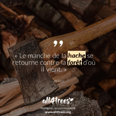 Citation #3 – Arbre & Forêt