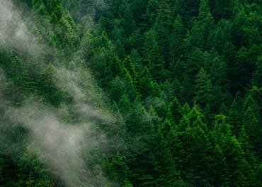 Célébrons la Journée internationale des forêts !