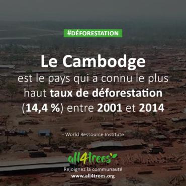 Du Cambodge à l'Europe, les ravages du trafic de bois