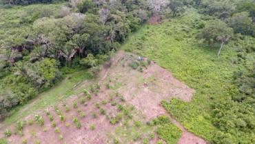 Qu'est-ce qui se cache derrière un projet de reforestation ?