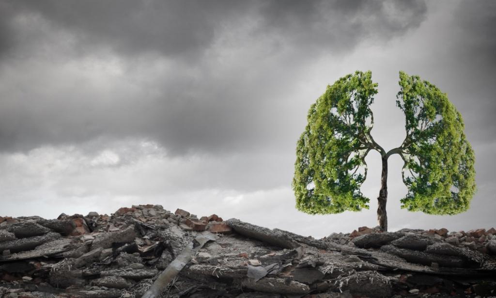 planter arbres climat