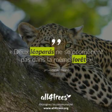 Citation #6 – Arbre & Forêt