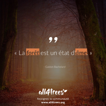 Citation #14 – Arbre & Forêt
