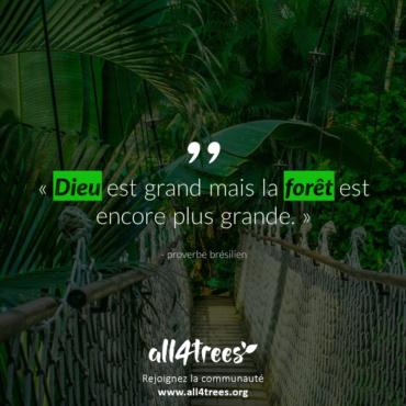 Citation #13 – Arbre & Forêt