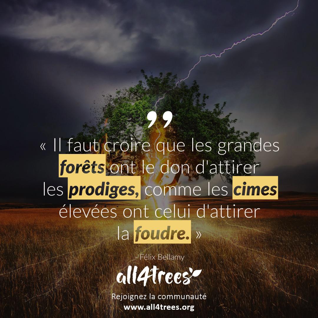Citation Il Faut Croire Que Les Grandes Forets Ont Le Don D