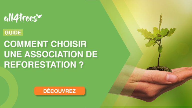 Guide – Comment choisir une association de reforestation ?