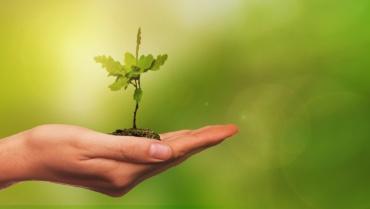 Planter des arbres, solution miracle face aux changements climatiques ?