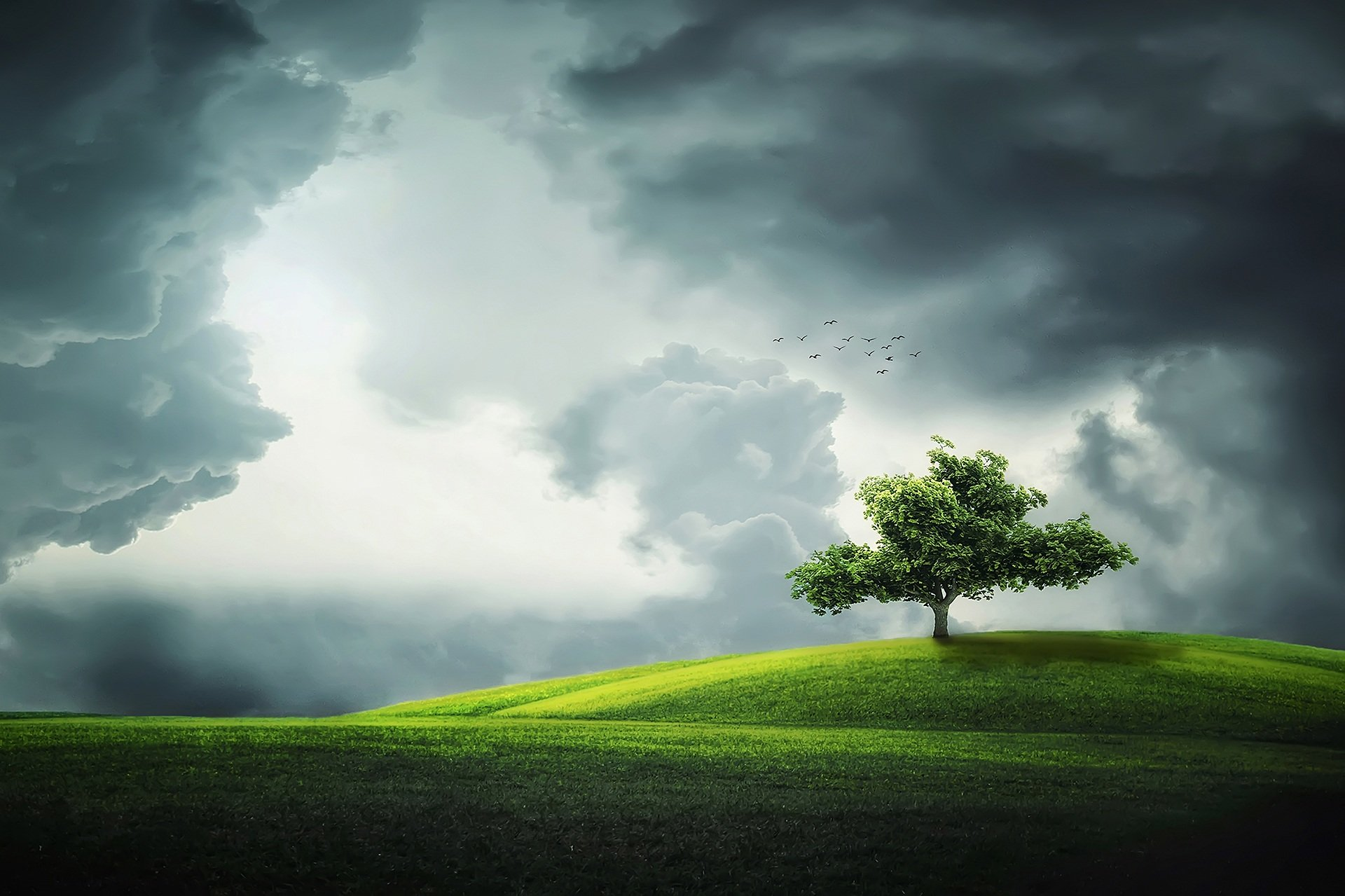 compensation carbone reforestation