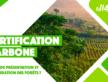 Les mécanismes de «certification carbone» sont-ils adaptés aux projets de préservation et restauration des forêts ?