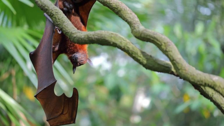 La déforestation favorise l'émergence de nouvelles épidémies