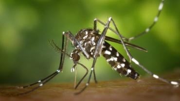 La déforestation favorise la propagation du paludisme