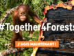 #Together4Forests – Ensemble, stoppons la déforestation !