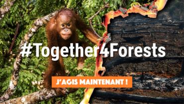 #Together4Forests – Ensemble, stoppons la déforestation !