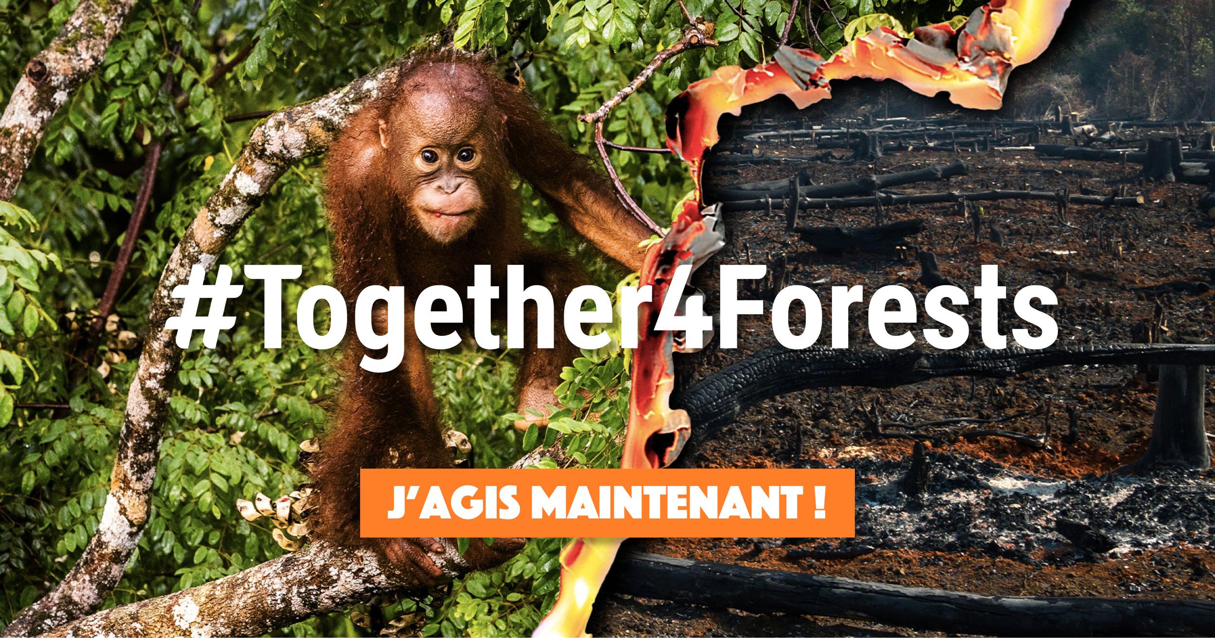 #together4forest