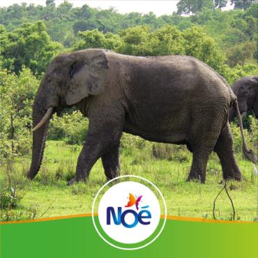 🇬🇭 Ghana – Projet de préservation du Parc National de Molé