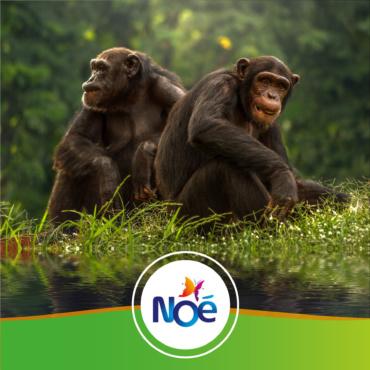🇨🇩 République Démocratique du Congo – Projet de préservation des forêts et des bonobos