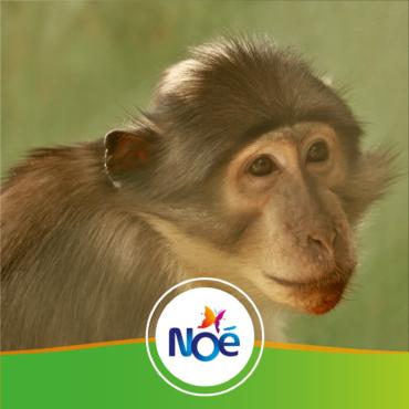 🇨🇮 Côté d'Ivoire / 🇬🇭 Ghana – Projet de création d'une réserve communautaire pour protéger les singes menacés