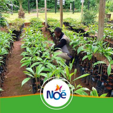 🇨🇲 Cameroun – Projet d'agroforesterie et de développement d'une filière de cacao