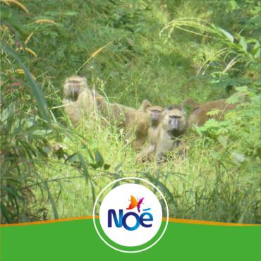 🇨🇲 Cameroun – Projet de préservation et régénération naturelle assistée de la savane arborée aux abords du Parc National de la Benoué