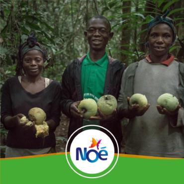 🇨🇲 Cameroun – Projet de préservation et de valorisation des ressources forestières