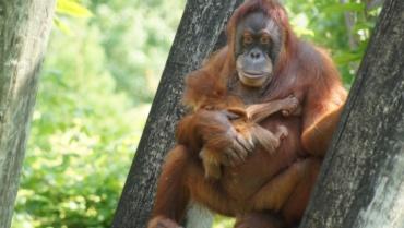 L'urgence d'agir pour préserver la biodiversité (et les forêts) !
