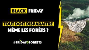 #Friday4Forests – Tout doit disparaître ! Même les forêts ?