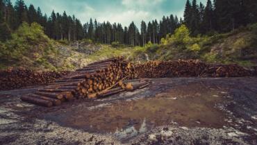 L'empreinte forêt des français : un constat choquant !