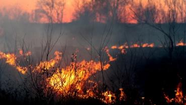 L'Amazonie brûle pour mettre des vaches et du soja