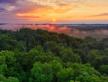 Découvrez 5 bonnes résolutions pour les forêts en 2021 !