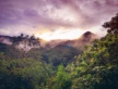2021 – 2030 doit être la décennie de la préservation ET de la restauration des forêts