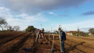 Participez à des chantiers participatifs de plantation d'arbres dans le Tarn