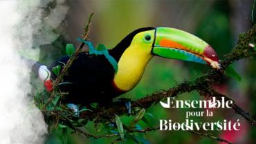 Ensemble pour la Biodiversité !