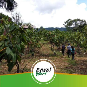 🇵🇪 Pérou – Projet de culture du cacao en agroforesterie